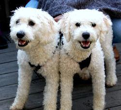 Milo and Bentley