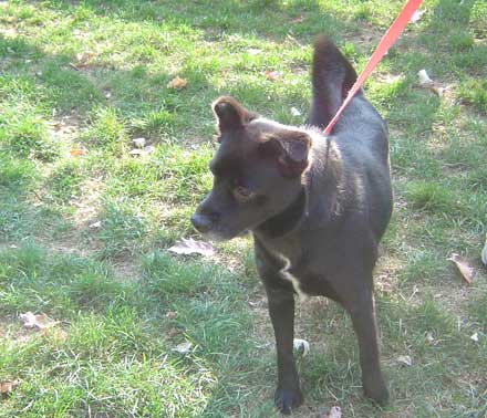 Mixed breed dog Mona needs a new home