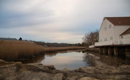 Marsh by Parking Harding Plaza, Westport, CT, Nov. 21, 2020, by Jonny Deitch