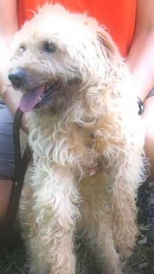 Terrier mix Quinton needs a new family
