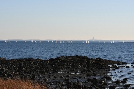 Sailboats on Sunday, Nov. 29, 2020 off Compo Beach, Westport, CT, by J.C. Martin