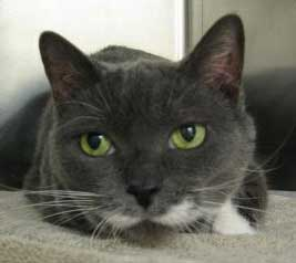 Kitty Shadow is Looking For Her Forever Family