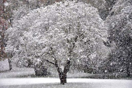 Winter tree by Cliff Sirlin