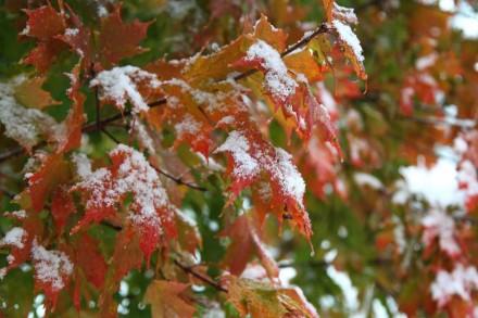 Clash of the Seasons by Joel Treisman