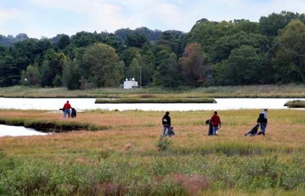 Marsh cleanup by Lynn U. Miller
