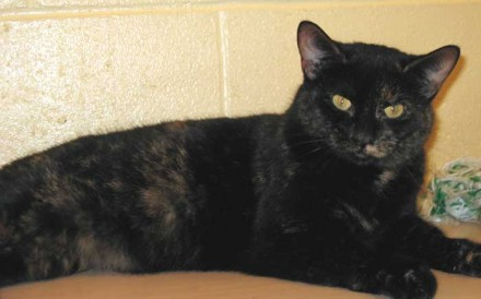 Cocoa the cat needs a home
