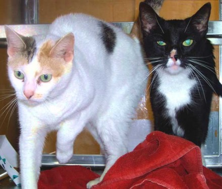 Frances and Daisy Cats need a new home