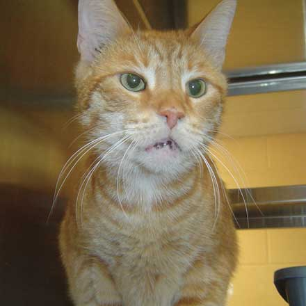 Morris the cat needs a new home
