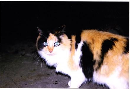 Princess Marmalade missing