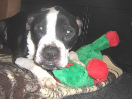 Rescue dog Rodney needs a new home