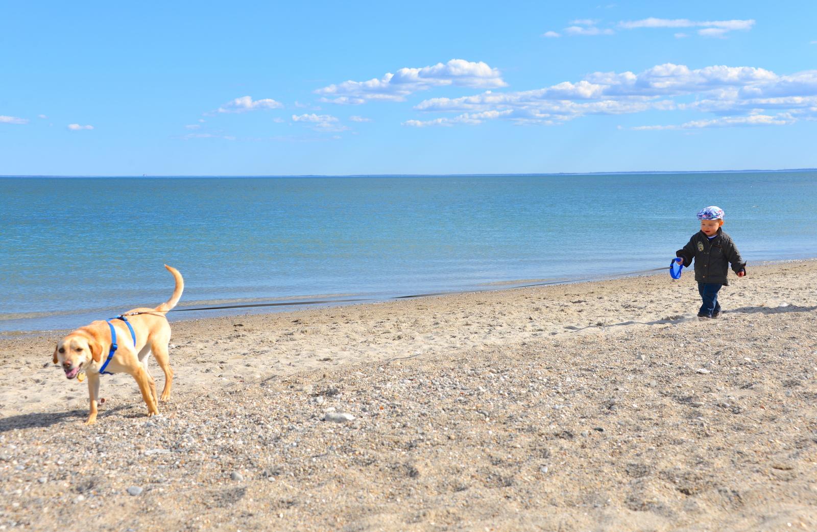 Who S Walking Whom Westportnow Westport Ct 60 Compo Beach